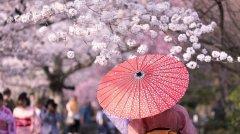 樱花季·日本精密体检<font color='red'>健康</font>赏樱之旅(文末有彩蛋~)